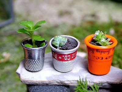 Plants in Thimbles
