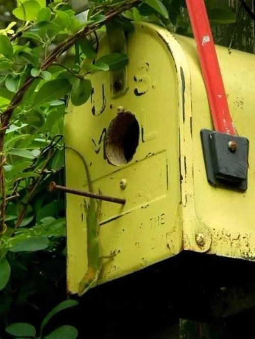 Mailbox Birdhouse - Crap I've Made
