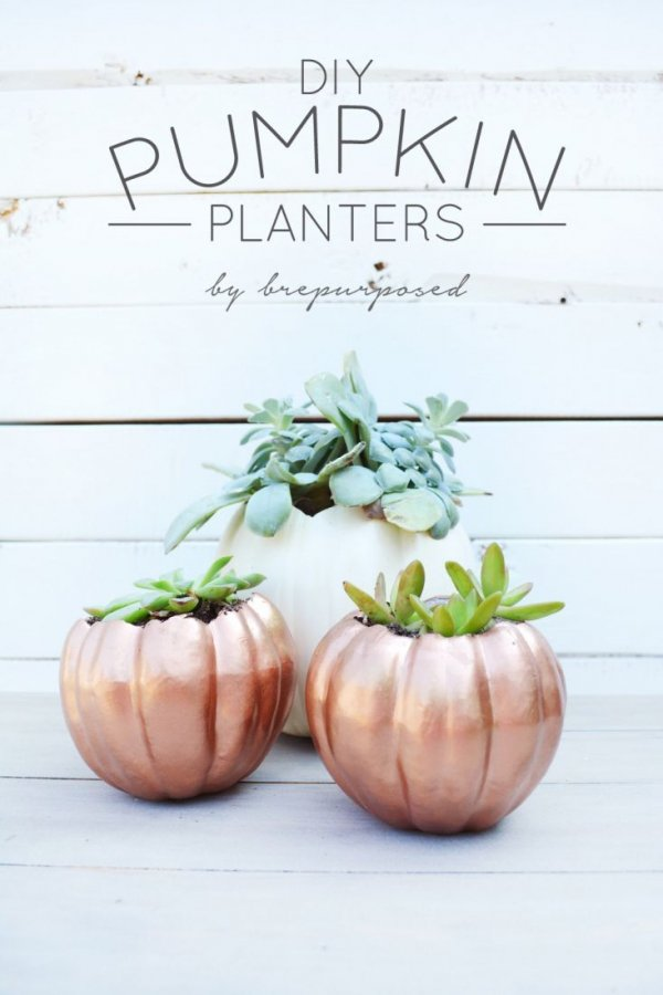 produce,food,vegetable,plant,land plant,