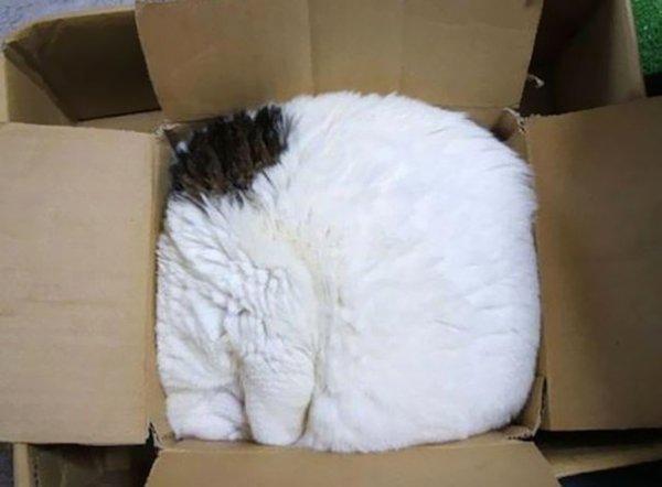 textile,fur,furniture,