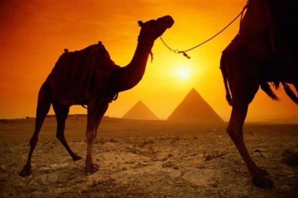 Ride a Camel to the Pyramids in Egypt