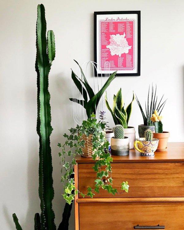flower arranging, green, floristry, plant, room,