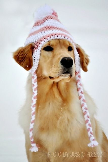 Crochet Pattern For A Hat For A Dog : Cut-Outs - 30 Dogs Wearing Hats, Because Why Not?