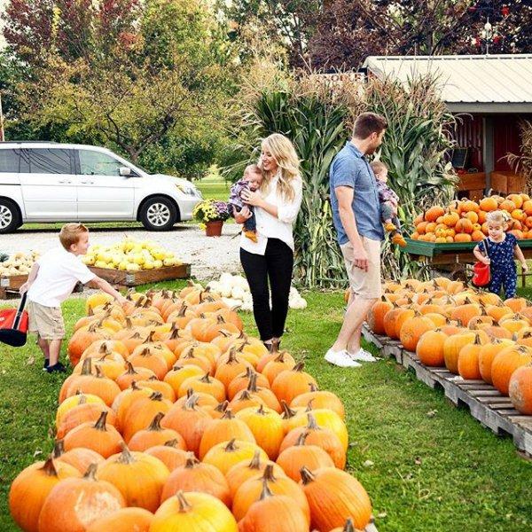 produce, pumpkin, plant, marketplace, fruit,