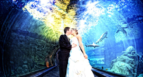 At An Aquarium 20 Unusual Locations For A Wedding