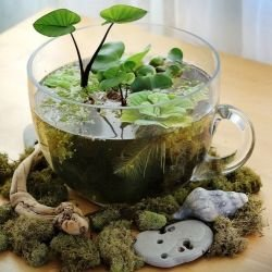 plant,flower arranging,floristry,flower,herbalism,