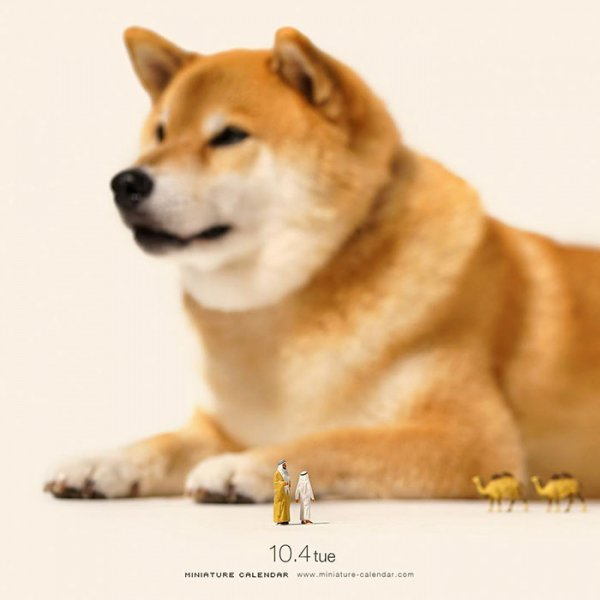 dog, mammal, dog breed, vertebrate, shiba inu,