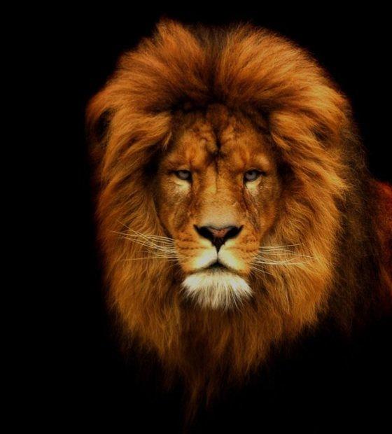 10 Amazing Portraits Of Wild Animals Lifestyle