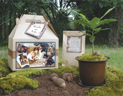 Seeds Of Life Oak Tree Kit 8 Best House Warming Gifts