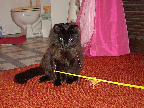 A fishing rod 8 great toys for your cat you can make for Kitten toys you can make