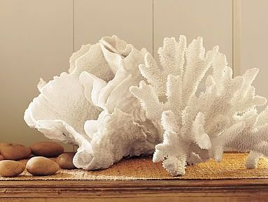 Coral For Home Decor