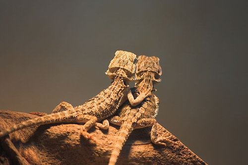Comprehensive Bearded Dragon Care Guide