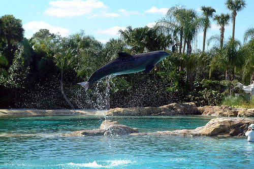 10 cool attractions in florida lifestyle for Florida cool