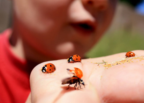 Bug Hunting 7 Great Hobbies For Kids Who Love Nature