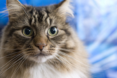 Con Two Words Litter Box 7 Pros And Cons Of Having A