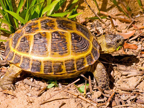 Tips on Caring for a Russian Tortoise ... ? ?? Health