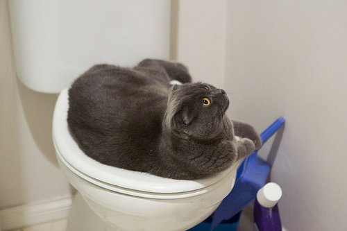 Cool Pictures Of Cats Fat Pooping