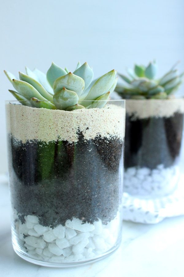 Layered Succulents
