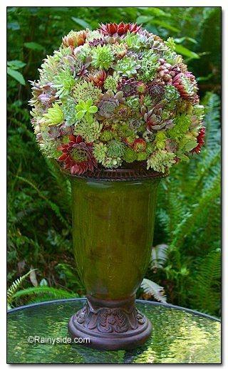 Succulent Plant Ball