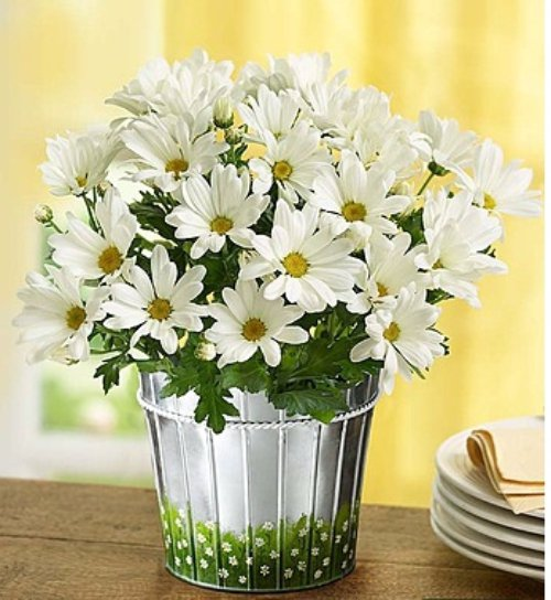 flower,plant,yellow,cut flowers,flower bouquet,