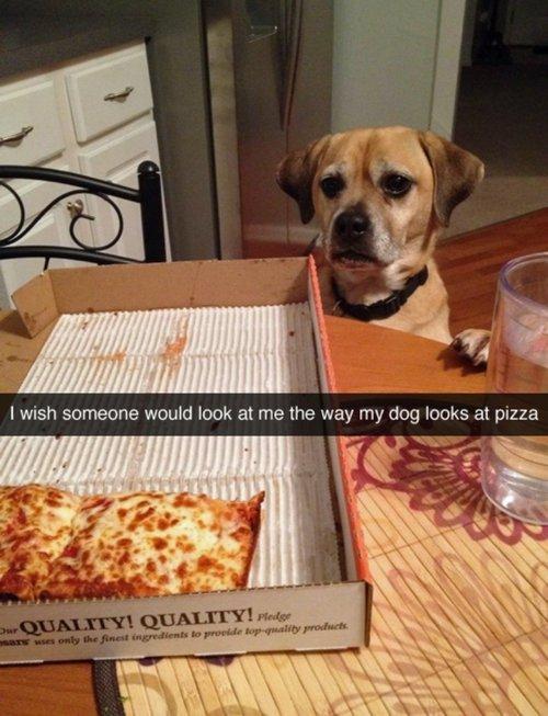 dog,mammal,dog like mammal,dog crossbreeds,wish,