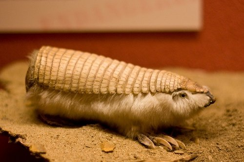 7 World's Most Unusual Animals ... →