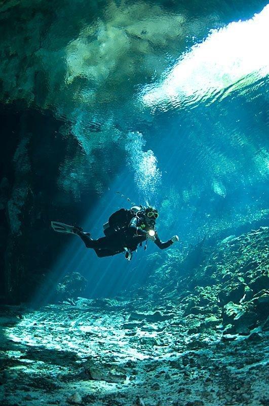 marine biology,underwater,ocean,sports,sea,
