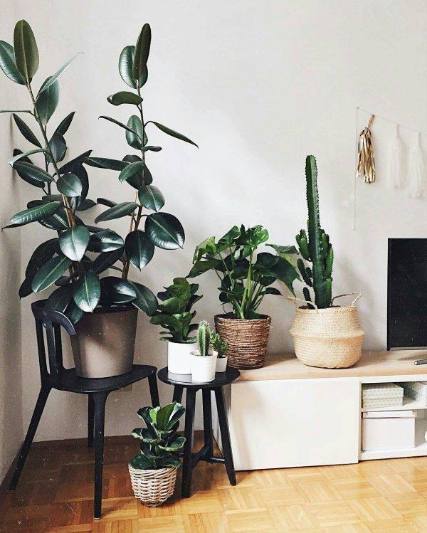 green, room, wall, floristry, shelf,