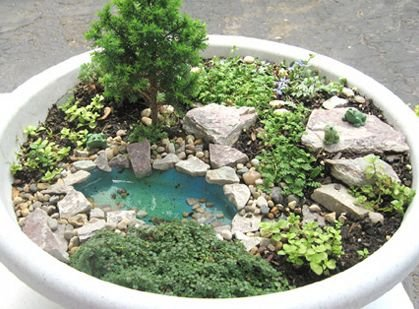 plant,pond,garden,soil,houseplant,
