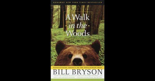 animal, mammal, vertebrate, grizzly bear, fauna,