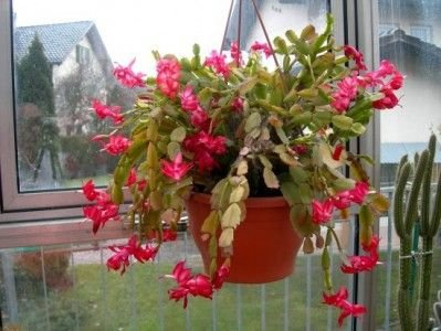 Hang Bright Flowers in Your Window