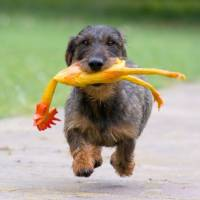 7 Easy and Cheap Toys to Make for Your Dogs ...