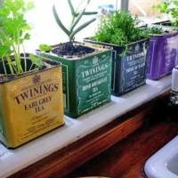 7 Unique Ways to Plant Herbs in Your Home ...