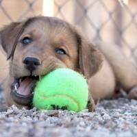 7 Terrific DIY Ideas to Recycle Tennis Balls ...