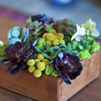 7 Insanely Beautiful Succulent Centerpieces to Make ...
