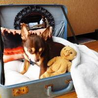31 DIY Pet Beds for Your Furry Friends ...
