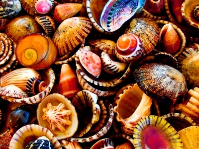 7 Crafty Things to Make with Sea Shells ...