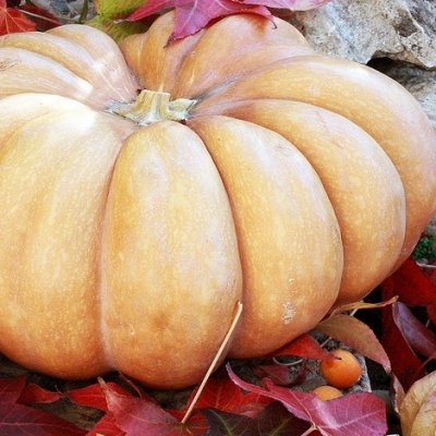 7 Awesome Varieties of Pumpkins That You Can Decorate for Halloween ...