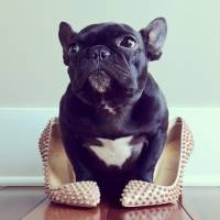 Four Legged Cuteness: 23 Most Fashionable Dogs on Instagram ...