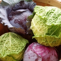 9 Winter Veggies to Keep You Warm and Healthy This Winter ...