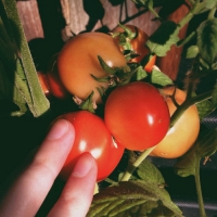 Smart New Ways to Use Tomatoes in Your Kitchen ...