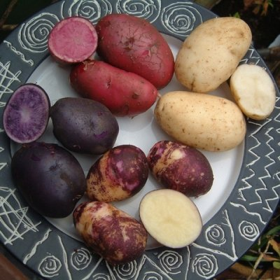 A Different Potato for Every Day of the Week ...