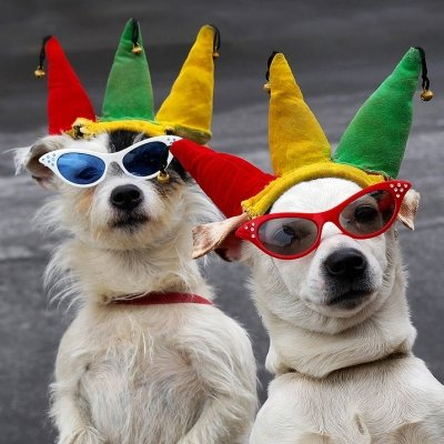 49 Dogs in Togs: Pooches Dressed for Halloween ...