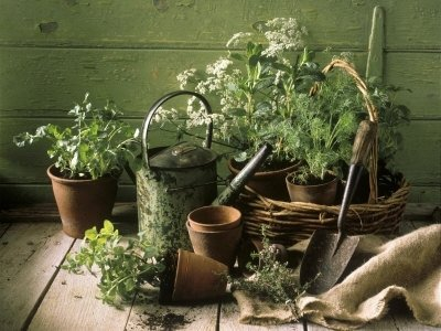 9 Healing Plants You Can Grow in Your Garden or Home ...