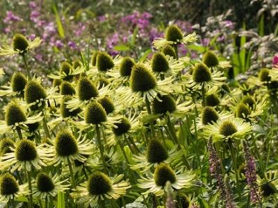 5 Plants with Unique Flowers …