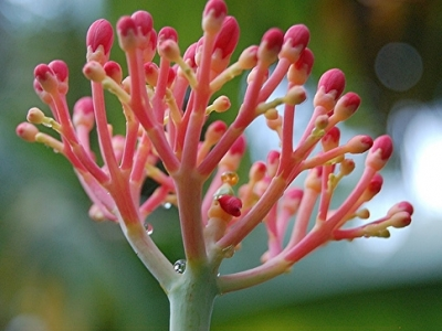 5 Plants That Have to Be Dug up in Cold Climates ...