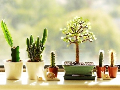 7 Ways to Get Cheap Plants ...