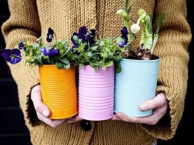 7 Best Potted Plants to Consider Having in Your Home ...