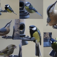 5 Things to do with Your Bird Feeder ...