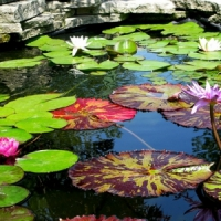 5 Tips on Keeping Your Pond Water Clean ...